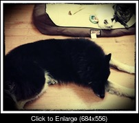 ImageUploadedByProBoards.jpg