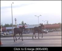 Moose Mardens PI.jpg